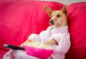 How to become a paid movie critic